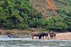 Nam Ou river scenes