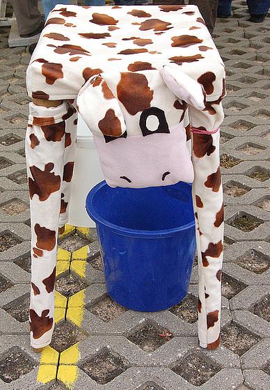 bovino melkenda - zu melkende Kuh