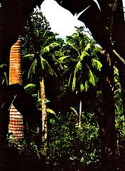 Tropical Vision