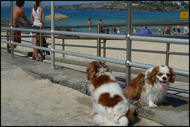 Bondi beach, Sydney, 2009.