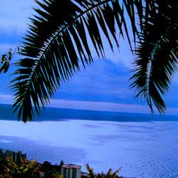Madeira Island (5)