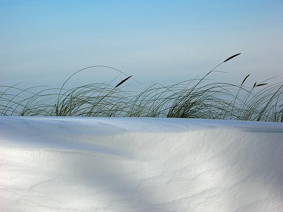 Schneehafer