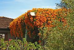 Smoke Tree Ranch (5250)