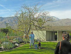 Smoke Tree Ranch Silk Floss Tree (8837)