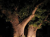 123 2358bc Hotel Welcoming Baobabs