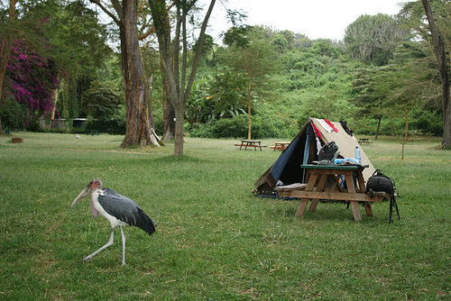 Camping at Lake Naivasha