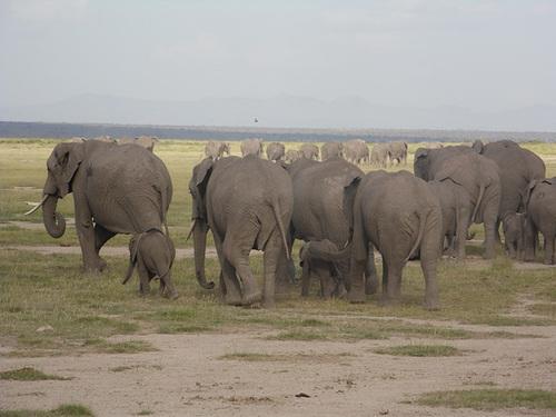 Elephant Bums