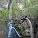 Darwin Falls (5108)