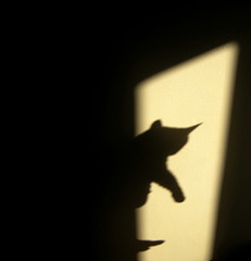 Playing shadow puppet with the cat