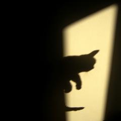Jouer aux ombres chinoises avec le chat