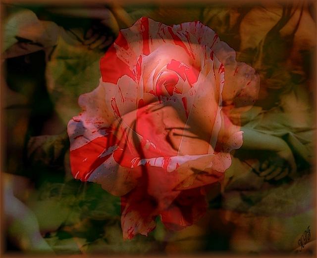 La rose et l'enfant