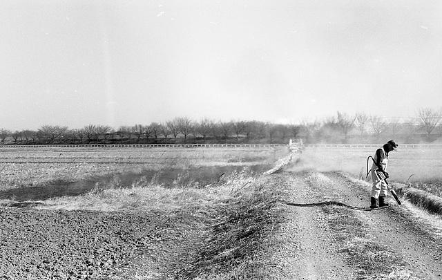 A man burns dried grass.