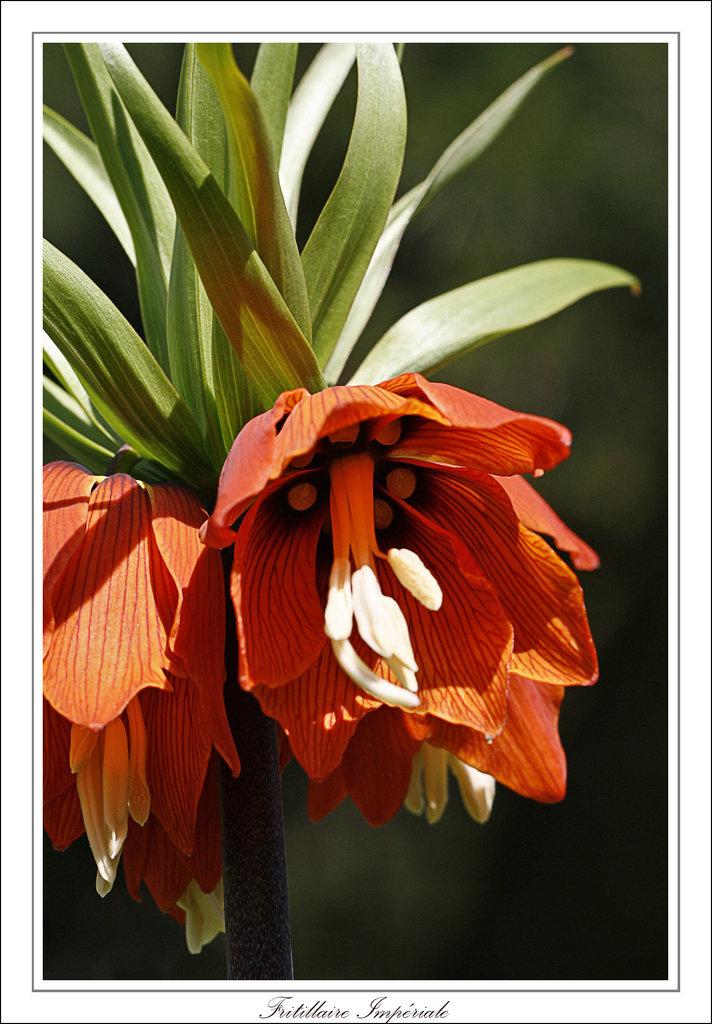 Une fleur par jour.... - Page 2 7746107.9b106534.1024