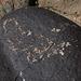 Three Rivers Petroglyphs (5836)