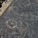 Three Rivers Petroglyphs (5841)