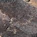 Three Rivers Petroglyphs (5857)