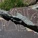 Three Rivers Petroglyphs (5861)