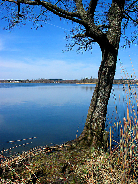 am Illmensee
