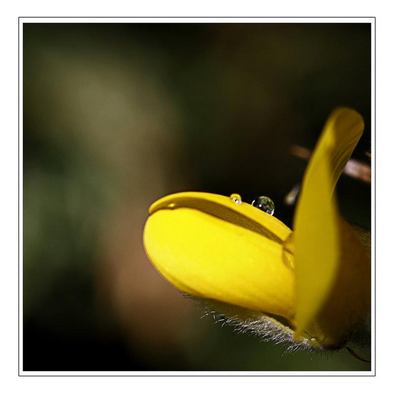 Une fleur par jour.... - Page 3 7646219.bd5f8b69.800