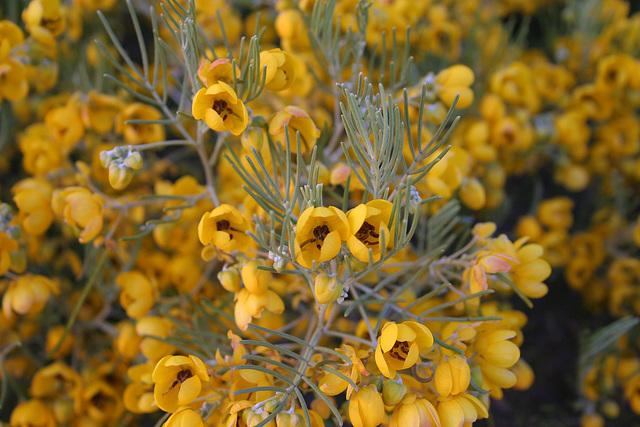 Flowers (4122)