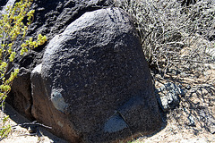 Three Rivers Petroglyphs (5879)