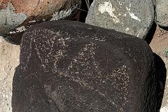 Three Rivers Petroglyphs (5884)