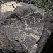 Three Rivers Petroglyphs (5887)