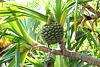 andere exotische Frucht