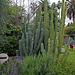 L.A. Garden Tour (6700)