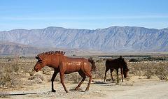 Galleta Meadows Estates Horse Sculpture (3618)