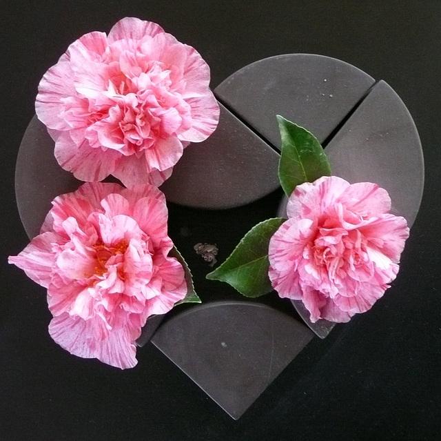 Herzliche Grüße mit diesen schönen Kamelienblüten