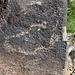 Three Rivers Petroglyphs (5850)
