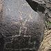 Three Rivers Petroglyphs (5851)