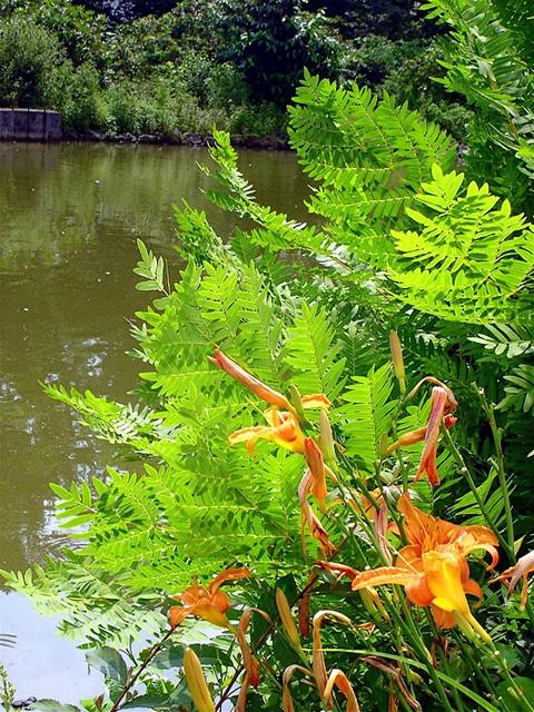 Mérignac(Gironde) Jardins de l'hôtel de ville