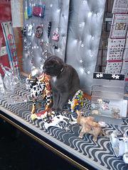 Living exhibit in a display window