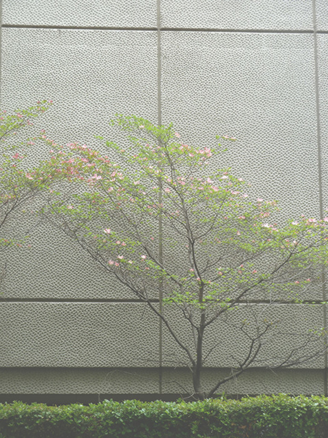 dogwood trees and concrete1
