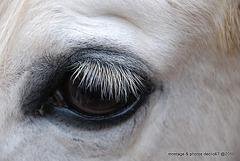 Clin d'oeil......de cheval..!