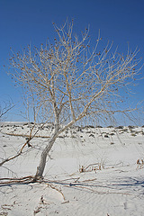 White Sands National Monument Nature Trail (6202)