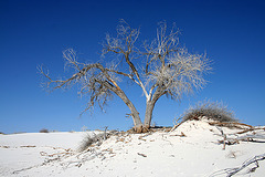 White Sands National Monument Nature Trail (6209)