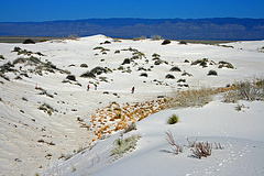 White Sands National Monument Nature Trail (6213)