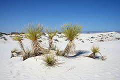 White Sands National Monument Nature Trail (6221)
