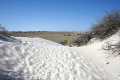White Sands National Monument Nature Trail (6223)