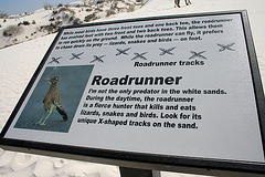 Ronnie Roadrunner (6197)