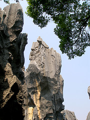 Stone Forest 2007