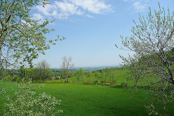 Frühling am Geisingberg - 824m