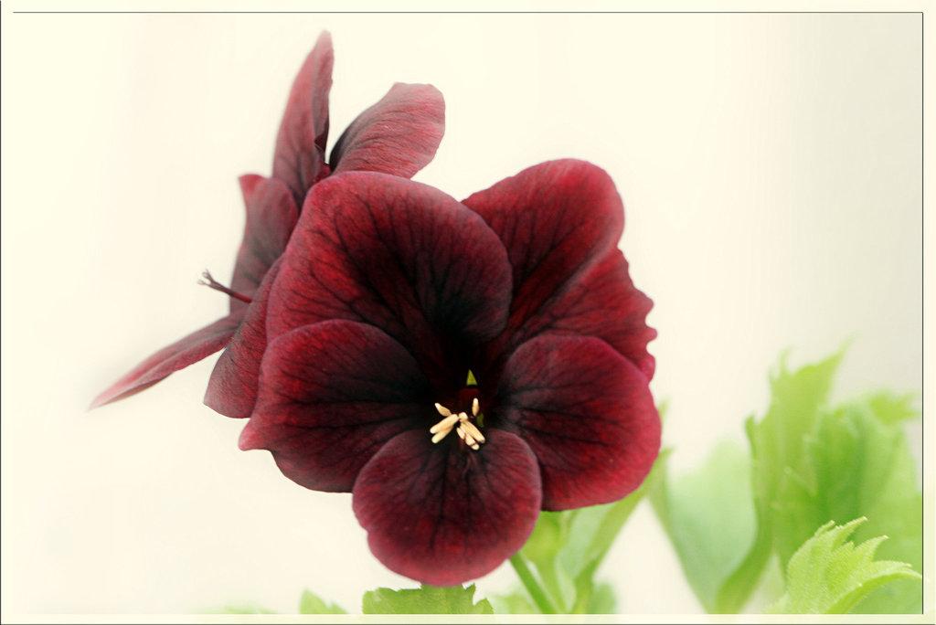 Une fleur par jour.... 7478228.ced76c13.1024