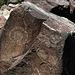 Three Rivers Petroglyphs (5895)