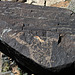 Three Rivers Petroglyphs (5898)