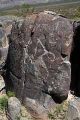 Three Rivers Petroglyphs (5900)
