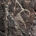 Three Rivers Petroglyphs (5901)